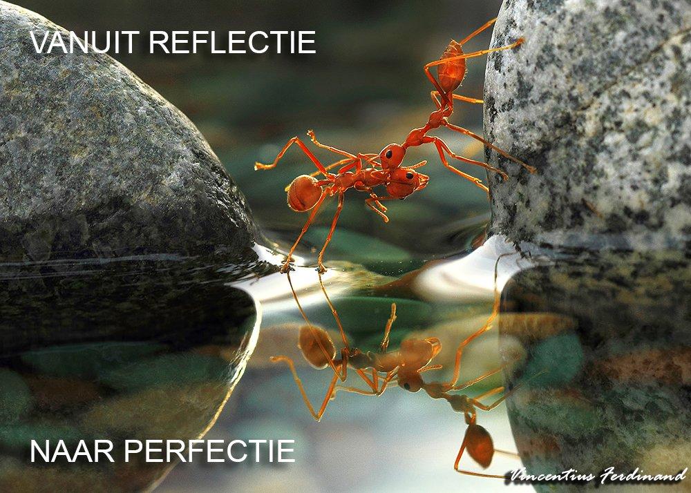 zorgcongres-vanuit-reflectie-naar-perfectie